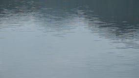Bevattna krusigt och fördelning på sjöbakgrund och texturera lager videofilmer