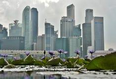 Bevattna lilly trädgården på Marina Bay, Singapore arkivfoto