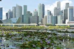 Bevattna lilly trädgården på Marina Bay, Singapore royaltyfria foton