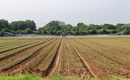 Bevattna maskinen som bevattnar ett fält av plantaskördar Arkivfoto