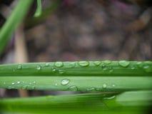 Bevattna på leafen Royaltyfria Bilder