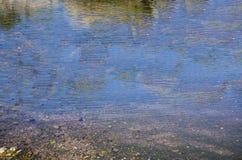 Bevattna reflexioner Arkivfoto