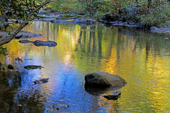 Bevattna reflexioner i liten ström i Smokiesen Royaltyfri Foto