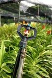 Bevattna sprinkleren Royaltyfri Foto