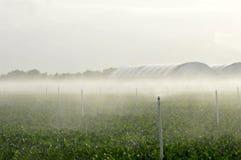 bevattna sprinklers Arkivbild