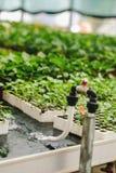 Bevattna systemet för växterna i barnkammare av det gröna huset Royaltyfri Bild