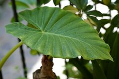 Bevattna tappar på en leaf royaltyfri fotografi