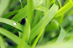 Bevattna tappar på en leaf arkivbilder