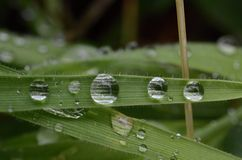 Bevattna tappar på gräs Arkivfoton
