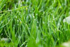 Bevattna tappar på grönt gräs Fotografering för Bildbyråer