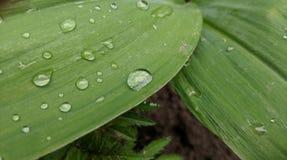 Bevattna tappar på leafen arkivfoto
