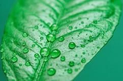 Bevattna tappar på leafen royaltyfri bild