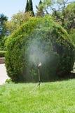 Bevattna trädgården Royaltyfri Bild