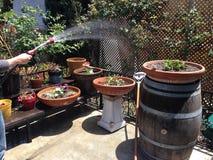 Bevattna trädgården Arkivfoto