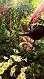 Bevattna trädgården Fotografering för Bildbyråer