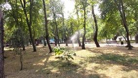 Bevattna trädgården genom att använda en sprinkleranläggning lager videofilmer