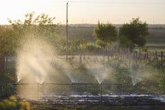 Bevattna trädgårdväxter på täppan Solen exponerar ljust springbrunnen av vattensprej arkivbilder