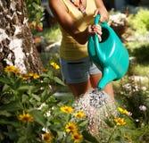 Bevattna växter på sommartiden Royaltyfri Foto