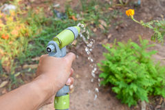 bevattna växterna med sprutpistolen Arkivfoton