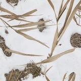 Bevattna vassen och snöa modellkamouflage för andjägare Arkivfoto