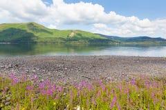 Bevattnar den jungfru- heden Derwent för sjöområdesberg och för rosa blommor sjönationalparken Cumbria UK Royaltyfri Bild