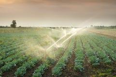 Bevattning av grönsaker Royaltyfri Fotografi