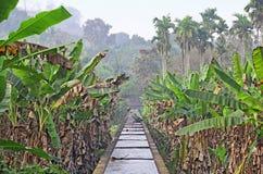 Bevattningkanal till och med Kerala banankoloni arkivbild