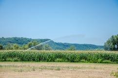 Bevattningmaskinvattnet havrefältet av majs på en varm sommardag som sparar det från torka Royaltyfri Fotografi