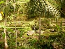 Bevattningsystem av den terrasserade risfältet i bali arkivbild