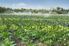Bevattningsystem i en grönsakträdgård royaltyfri fotografi