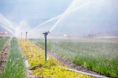 Bevattningväxtsystem på ett fält, ett jordbruk och växter fotografering för bildbyråer