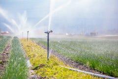Bevattningväxtsystem på ett fält, ett jordbruk och växter royaltyfria bilder
