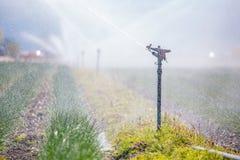 Bevattningväxtsystem på ett fält, ett jordbruk och växter royaltyfri foto