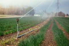 Bevattningv?xtsystem p? ett f?lt, ett jordbruk och v?xter royaltyfri foto