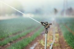 Bevattningv?xtsystem p? ett f?lt, ett jordbruk och v?xter arkivfoto
