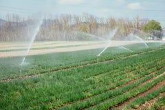 Bevattningv?xtsystem p? ett f?lt, ett jordbruk och v?xter royaltyfri bild