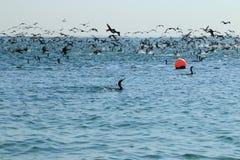Bevederde vissers Stock Foto