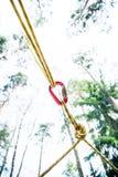 Beveilig het vastmaken van de kabel tussen bomen aan het beklimmen carabiner royalty-vrije stock afbeeldingen