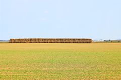 Beveled haystack, summer, straw wrapped on the field stock photography
