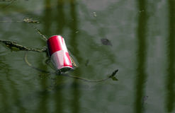 Beverage can floating in a pond Stock Image