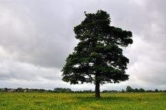 Beverley westwood Wschodni Yorkshire Anglia Obraz Stock