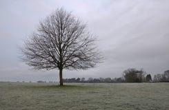 Beverley westwood Wschodni Yorkshire Anglia Obrazy Royalty Free
