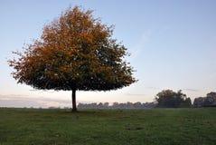 Beverley westwood Wschodni Yorkshire Anglia Obraz Royalty Free