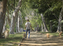 Beverly Hills, CA, los E.E.U.U. junio, 2do, árbol hermoso 2015 alineó Beve Fotografía de archivo
