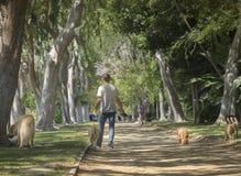 Beverly Hills, CA, U.S.A. il secondo giugno, bello albero 2015 ha allineato Beve fotografia stock