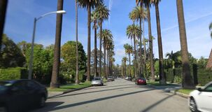 Beverly Hills street with palm trees. Beverly Hills, CA, USA - January 10, 2018: Driving down a Beverly Hills street with palm trees stock video footage