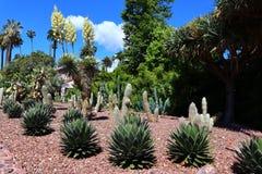 Free BEVERLY HILLS, California: Beverly Hills Cactus Garden Stock Photo - 187237900