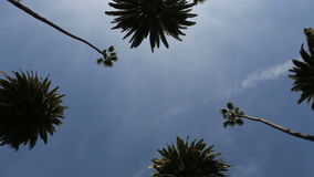 Beverly Hills Palms stock footage