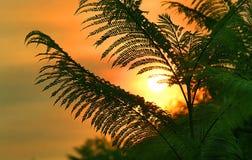 Beverly Hills soluppgång Royaltyfria Foton