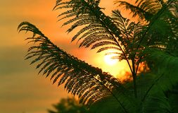 Beverly Hills Sunrise. Fern against sunrise royalty free stock photos